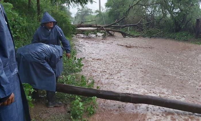 Impactantes imágenes: caída de árboles y fuerte temporal en Cabra Corral